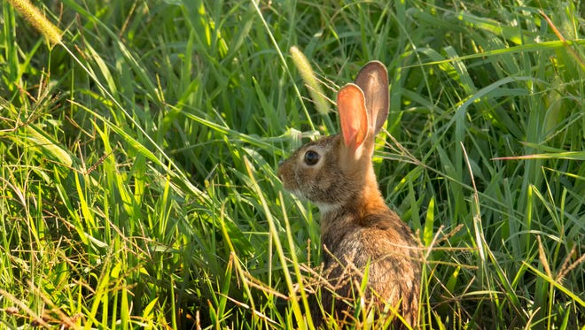 A wildlife official says two squirrels and two rabbits were likely killed by the same person.