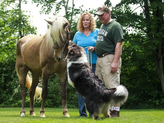 Finneas, a 4-year-old Rocky Mountain horse that had gone missing since June 30, is back home safely with his owner Amy Helgren of St. Johns and husband Rick, along with Fergus, the family dog.