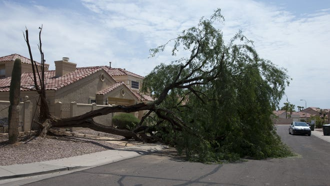 Heavy damage from a monsoon storm rips up a tree near Woodland Drive and 33rd Road.