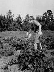 A Champlain Elementary School student waters the garden.