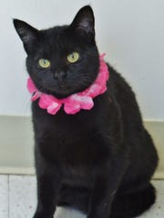Ali is an all black girl with expressive green eyes. She's about 3 years old and came into the shelter because her owner passed away. She's been with us since February and needs a second chance. Can you help Ali out?