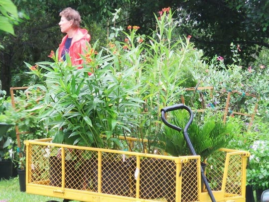 Native plants sit upon a wagon at the Rotary Park Environmental Center's twice-yearly native plant sale. The sale ties into the park's Florida friendly yards and neighborhoods workshops.