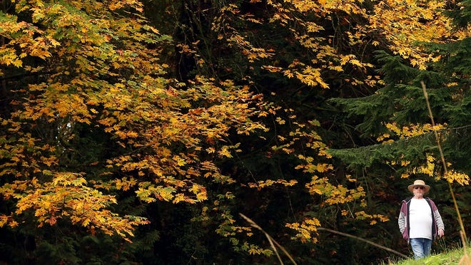 Fall leaves on display at Illahee State Park.
