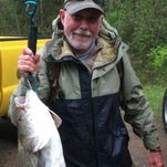 David Lawrence holds up the 20-pound, 10-ounce hybrid he caught that set the Percy Priest Lake record.