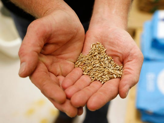 Rich Eggers holds up a palm full of the rye grain used
