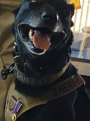 Tess, a K-9 officer for the Washington County Sheriff's
