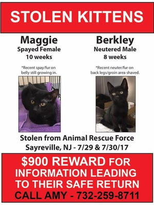 A reward is being offered for information leading to the safe return of two kittens stolen from Animal Rescue Force in Sayreville last weekend.
