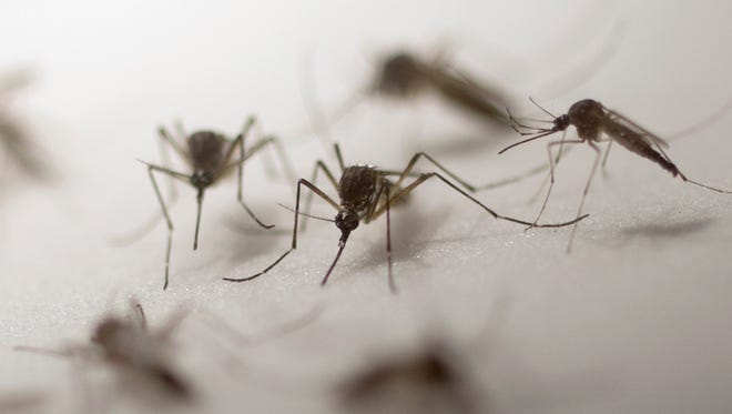 Walnut Township Trustees reported the West Nile virus was detected in samples from mosquito traps in the Thurston area on July 31.