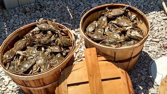 Jack Hess had a great day crabbing in the back bays of Brigantine on August 2.
