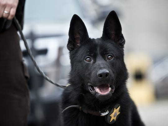Faust, a new police dog, pictured Wednesday, Dec. 30, 2015, at the St. Clair County Sheriff's Department.