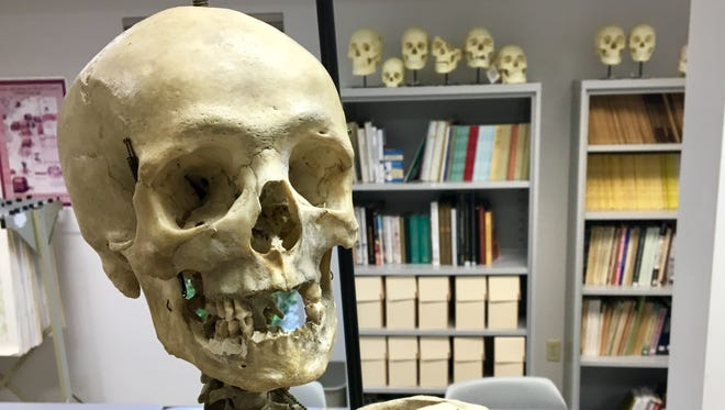 This skeleton, now housed in the University of Southern Indiana archaeology lab, was long thought to be the body of the first man executed in Evansville. It is not, the professors say.