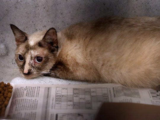 PAWS received around 100 cats that were seized from