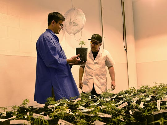 Cultivation manager Dr. Daniel Hopper, left, and cultivation consultant Dr. Matthew Wheatley inspect young plants at the Silver State Relief medical marijuana grow facility in Sparks on July 24, 2015.
