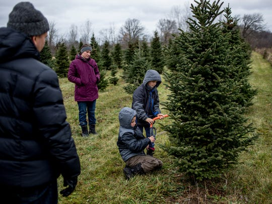 Eamon Sapp, 7, and Elijah Sapp, 8, take turns cutting a tree along with their parents, Larry and Tareeshia Sapp, of Clinton Township, Saturday, Nov. 26, 2016 at Dunsmore Blue Spruce Tree Farm in Smiths Creek.