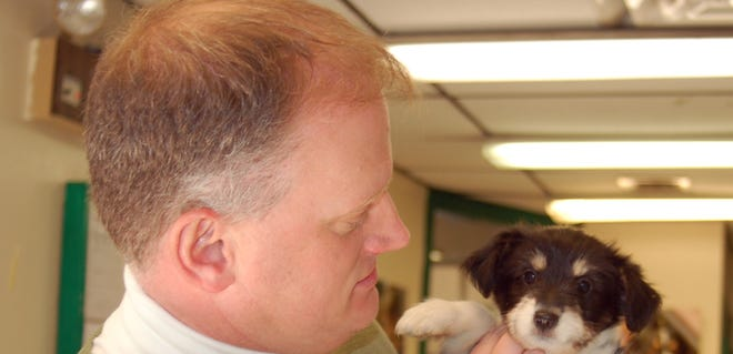 Patrick Carroll, DHA executive director, checks one of the puppies the shelter has placed with a foster family.
