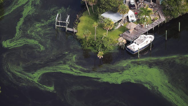 Algae blooms seen in June 2016 in the St. Lucie River in Martin County.