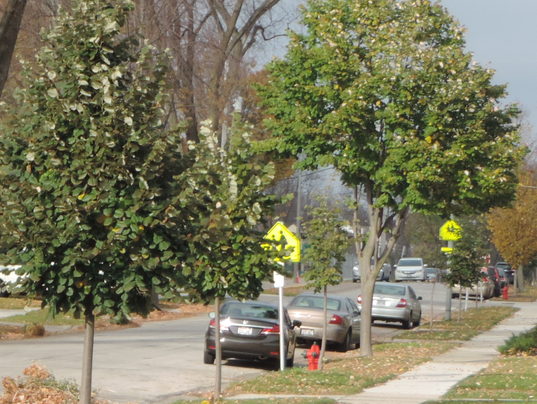 636154163576699839-Trees-in-Tosa---Nov.-15-2016-004-5-.png