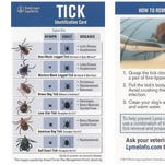 Perks of a harsh winter? The colder weather is killing off ticks