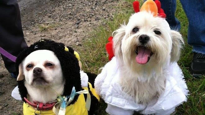 Previous year pet costume contest participants.