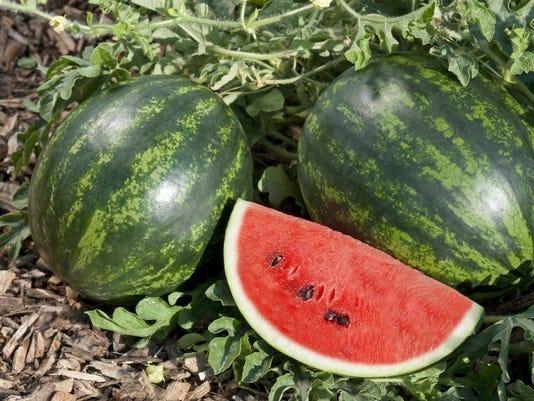 Watermelon-MiniLoveF-1-1-1CGVLUEF-L955179447-IMG-Watermelon-MiniLoveF-1-1-1CGVLUEF.jpg