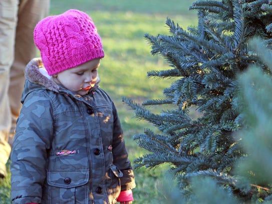 Maelie Newby, 2, of Mukwonago, examines a Christmas
