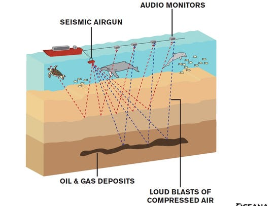 Environmentalists fear seismic air guns could harm