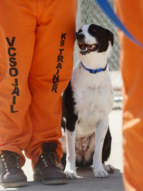 Jail program helps inmates and dogs solutioingenieria Image collections