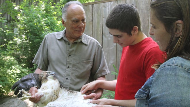 From left, Paul Kupchok, Wildlife Director, at Green Chimneys, Bruno, a graduating student at the school, and Toni DeMato,  social worker, look over a Red-tailed hawk that was injured and rehabilitated June 1, 2016. The hawk will be released by Bruno during the 24th annual Birds of Prey Day at Green Chimneys on Sunday June 5.