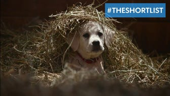 """Super Bowl ad for Budweiser called """"Lost Dog."""""""