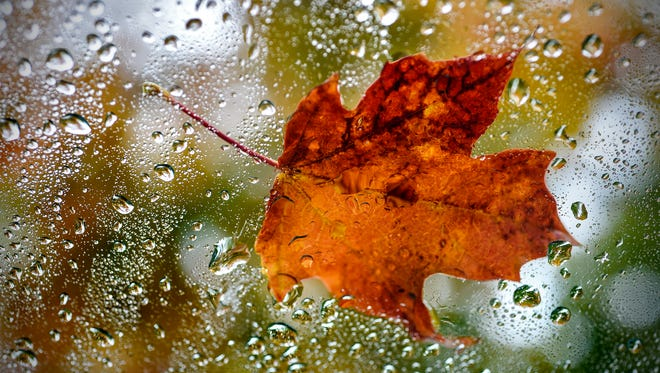 Raindrops surround a newly-fallen leaf near Lake George Tuesday, Oct. 3, in St. cloud.