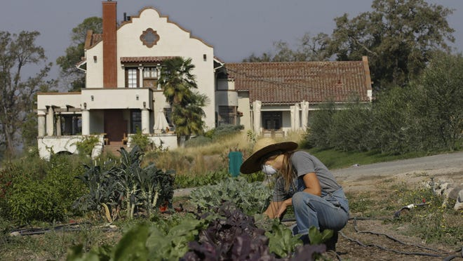 Casie Giroux, who manages the farm at the Scribe Winery, tends to the garden Oct. 18 in Sonoma. Like many in the area, Giroux lived with friends after evacuating her home as a massive wildfire swept through the area last week.