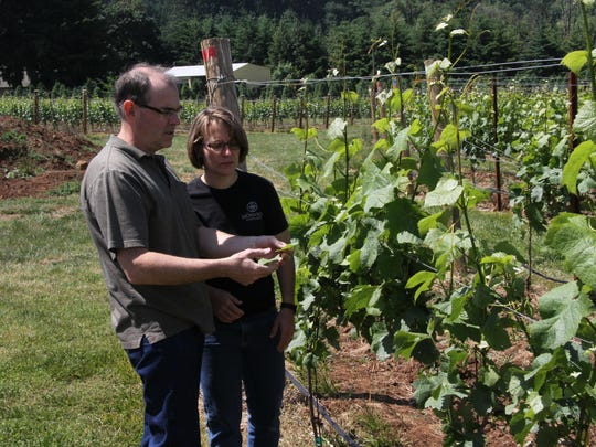 Pattie and Mark Bjornson examine some grape vine leaves in their vineyard for possible mold.