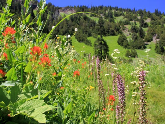 Wildflowers highlight Echo Basin Trail in the Old Cascades near Santiam Junction.