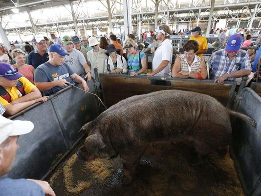 0814 State Fair Boar 12