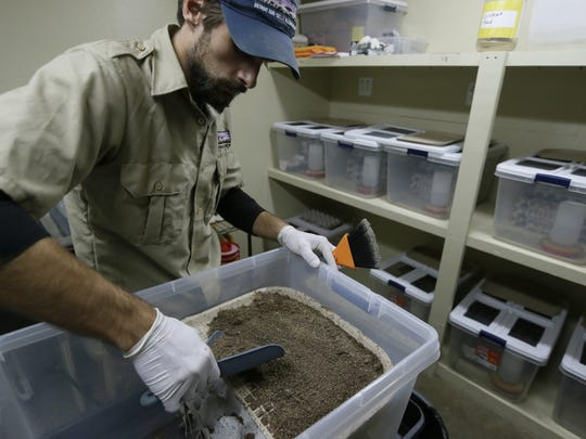 Detroit Zoo commissary worker Mike Cser works in the zoo's cricket breeding area in Royal Oak.