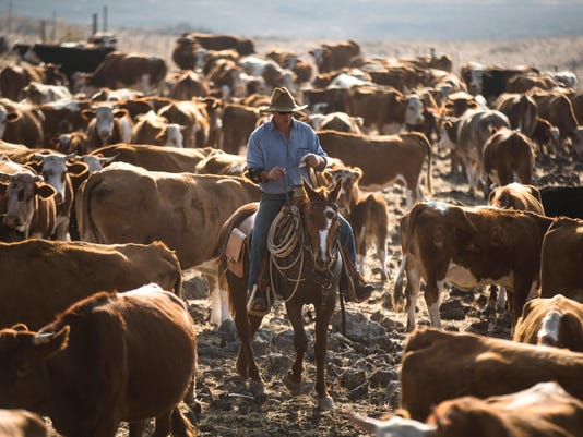 Cowboys Of The Golan Heights