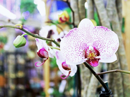 English Gardens' 14th annual Orchid Festival is on Saturday.