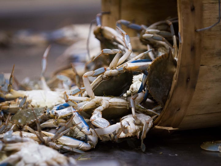 The annual blue crab dredge has yielded valuable insights