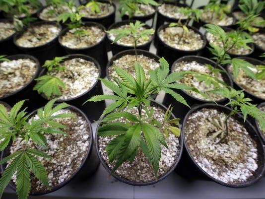 Legalizing Marijuana_Redm