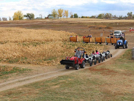 A pair of tractor rides thread through the field outside the Applestem Inc. Corn Maze near Vaughn.