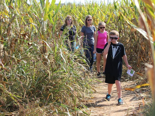 Get lost in the corn maze at Harvest Fest.