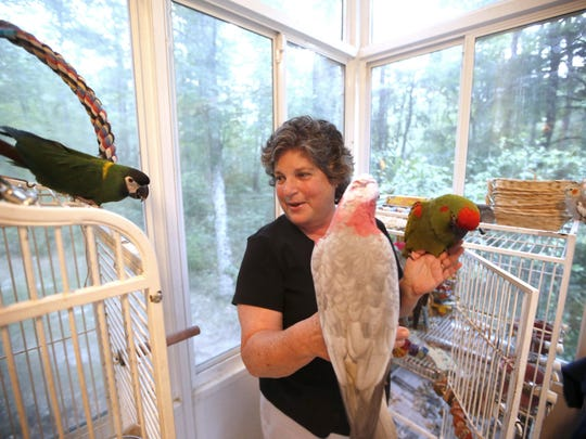 Lisa Lazarus Brown holds two of her rescued pet parrots at her home with an airy view of the woods at the Miccosukee Land Co-op. She considers herself a newcomer to the community and says she loves her communally-built house.