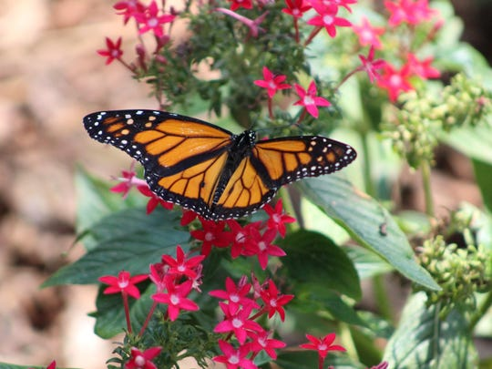 A butterfly gardening class will be held Friday in Milton. If you can't make that one, another is planned for Jan. 19 in Gulf Breeze.