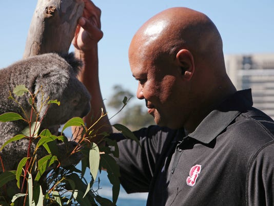 U.S. college football head coach from Stanford David Shaw is introduced to a koala named Archer during the launch of the season opening NCAA football game in Sydney, Tuesday Aug. 22, 2017. The game will be played on Sunday. (AP Photo/Rick Rycroft)