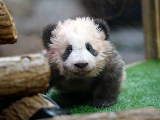 FRANCE-CHINA-DIPLOMACY-PANDA