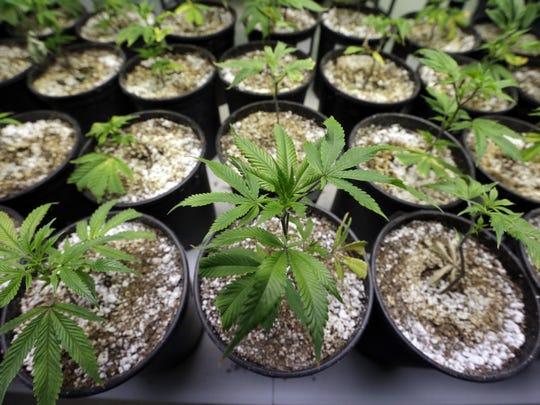 Legalizing Marijuana Redm