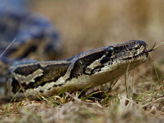 python02.jpg