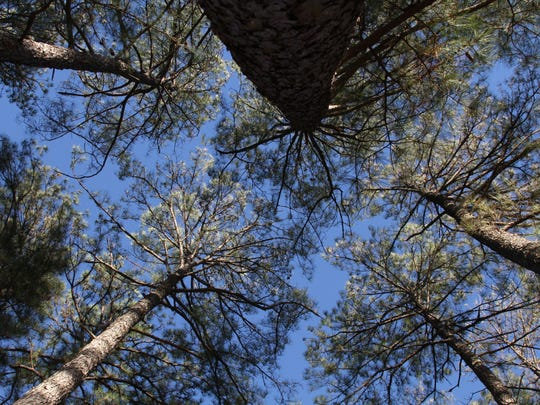 Trees continue to be the state's most valuable crop.