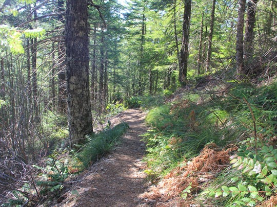 The Henline Mountain Trail is wide and well-maintained but steep in the Opal Creek Wilderness.