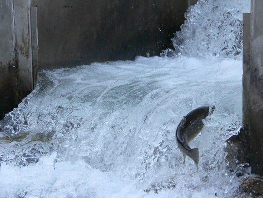 Lead photo  trout